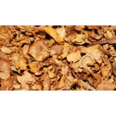 Chanterelles / dried /